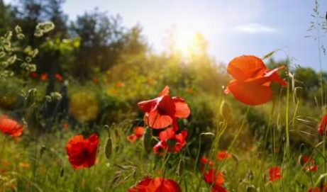 Mercredi 12 juillet  2017 à 19 h : Soirée d'été : Lumière et Joie sur nos cœurs –  douceurs, senteurs et chant intuitif